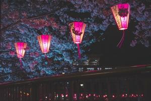 Japan Night Cherry Blossom Trees Lantern Glowing Night