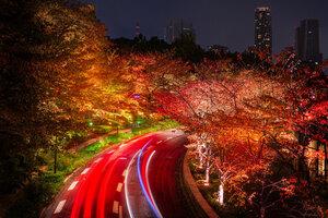 Japan Tokyo Roads Autumn Trees Night Wallpaper