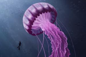 Jellyfish Digital 4k Wallpaper