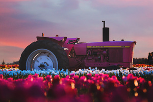 John Deere Tractor In Flower Farm 4k Wallpaper