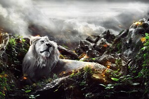 Jungle Lion Creative