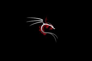 Kali Linux 4k Wallpaper