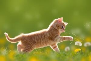 Kitten Cute 4k Wallpaper