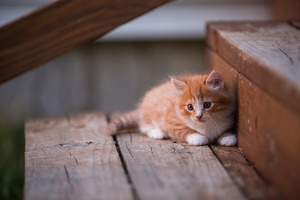Kitten Cute Wallpaper