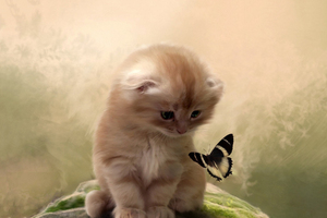 Kitty Playing With Butterfly Wallpaper