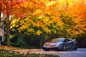 Lamborghini Autumn Gallardo Wallpaper