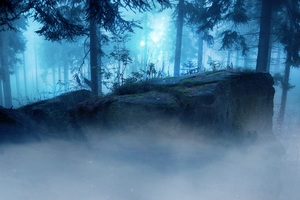 Landscape Forest Dark Evening Wallpaper