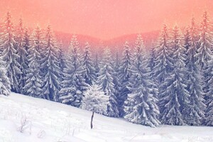 Landscape Snow Trees 5k Wallpaper