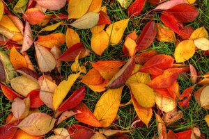 Latest Autumn Leaves