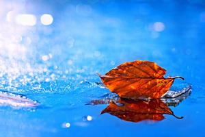 Leaf Fall 4k