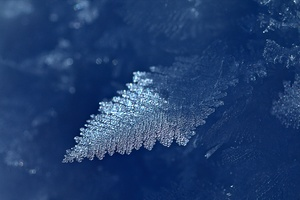 Leaf Ice Frost Wallpaper