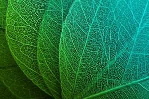 Leaf Macro Stock