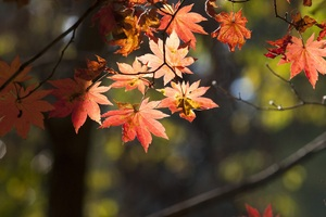 Leaves Autumn