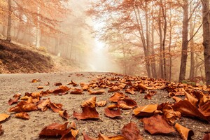 Leaves Fall On Road Wallpaper