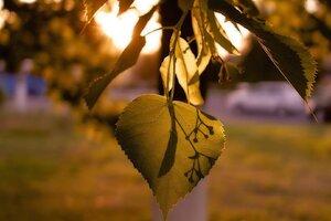 Leaves Macro Lights