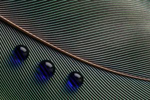 Leaves Macro Water Droplets 4k Wallpaper