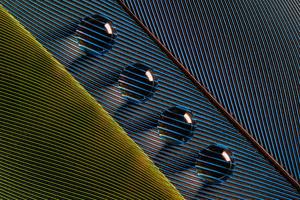 Leaves Macro Water Drops Wallpaper