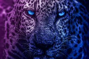 Lion Blue Eyes Wallpaper