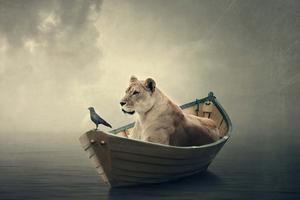 Lion Boat 5k