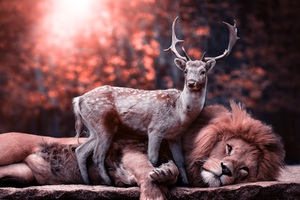 Lion Deer Wallpaper