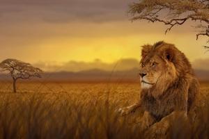 Lion Forest 5k