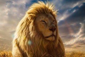 Lion King 4k Wallpaper