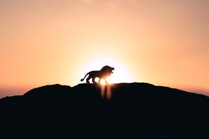 Lion Roaring On Top Of Mountain 5k Wallpaper