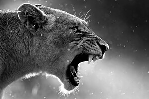 Lion Roaring Wallpaper