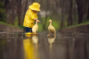 Little Boy Child Playing With Ducks Wallpaper
