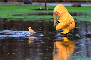 Little Girl Playing With Duckling