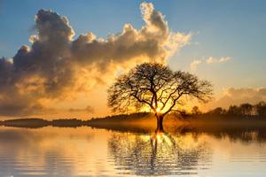 Lone Tree In Lake