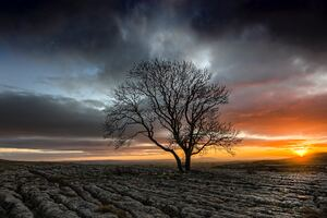 Lonely Tree In Drought Field Sunset Wallpaper