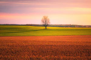 Lonely Tree In The Middle Of A Crop Field 4k Wallpaper