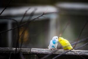 Love Birds 4k