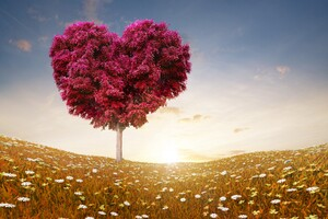 Love Heart Tree Wallpaper