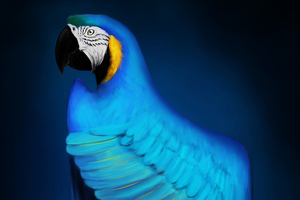 Macaw Digital Art Wallpaper
