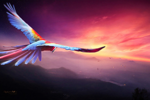 Macaw Flight Digital Art 4k Wallpaper