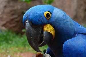 Macaw Parrot 2 Wallpaper