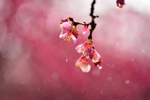 Macro Blossom Flowers Dews 4k Wallpaper