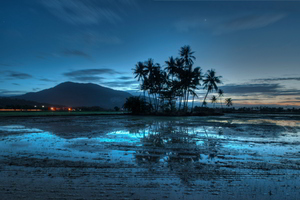 Malaysia Palms Sunset