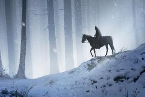 Man Horse Walking Through Woods 4k Wallpaper