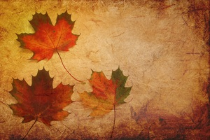 Maple Leaves Texture Background