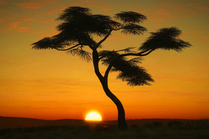 Masai Mara Sunrise Wallpaper