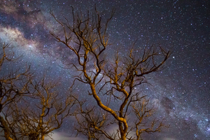 Milky Way Galaxy Tree Dark 4k