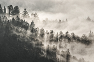 Mist Winter Trees In Mountains 5k Wallpaper