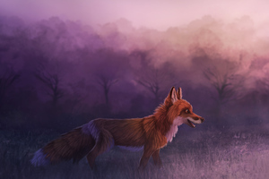 Misty Red Fox 4k
