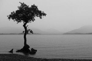 Monochrome Nature