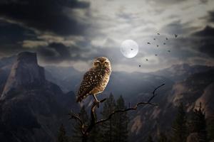 Moon Fantasy Owl