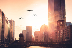 Morning City Rise Birds Flying Wallpaper