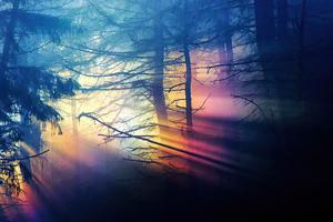 Morning Sunbeams Forest 4k Wallpaper
